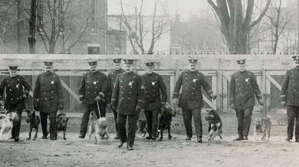 L'invenzione dei cani poliziotto